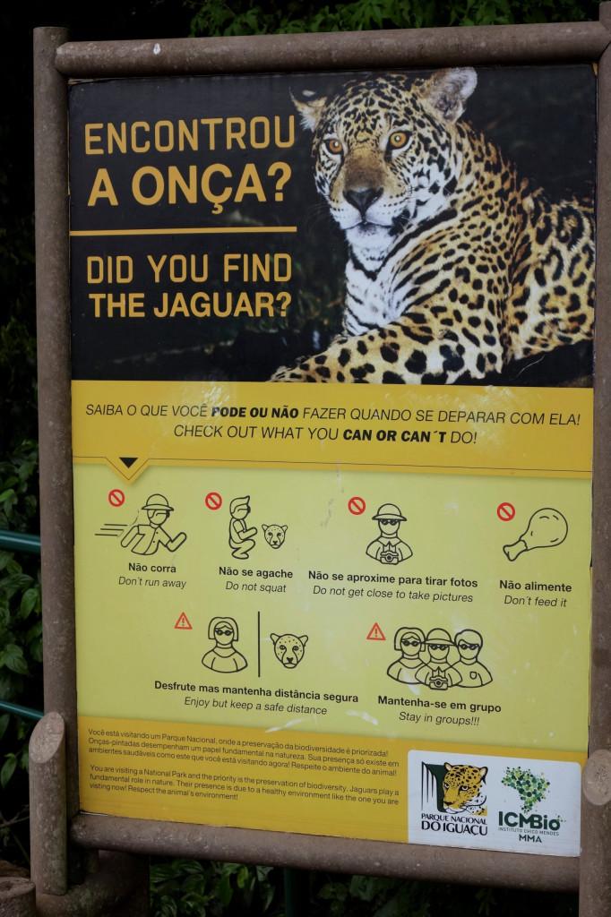 Iguazu Wasserfälle Jaguar