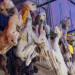 Lamaföten Hexenmarkt