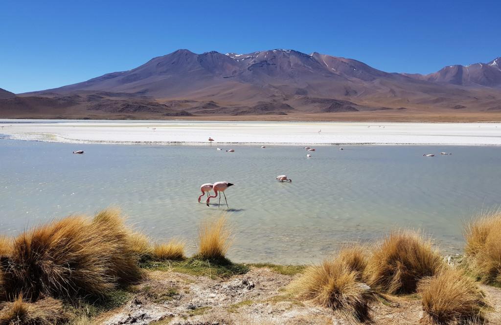 Altiplano Bolivien