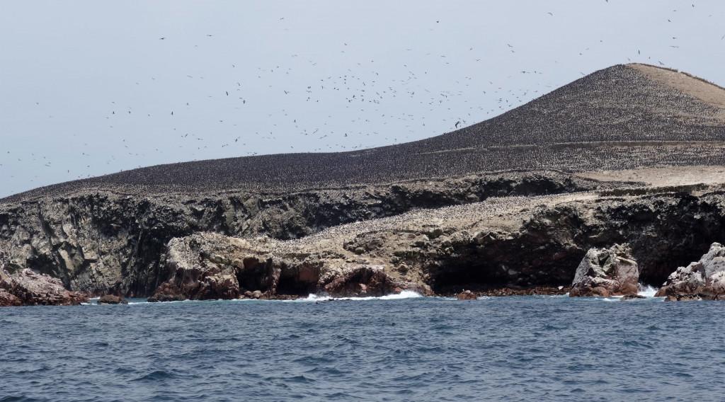 Ballestas Inseln Peru