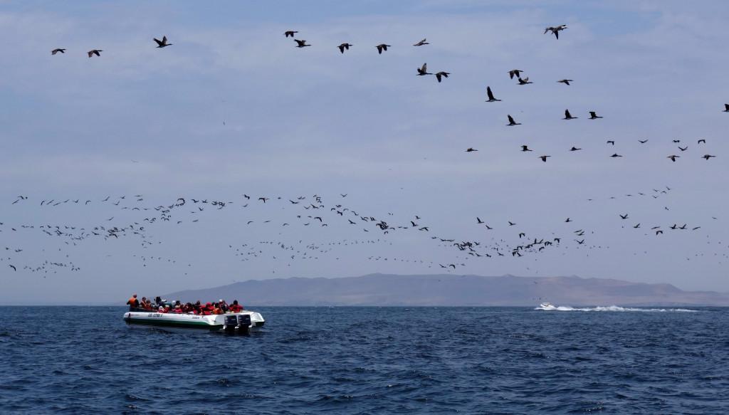 Vogelschwärme vor der Küste Perus