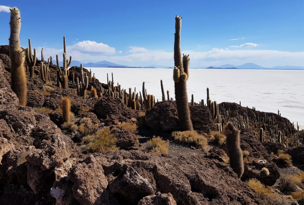 Isla Incahuasi Salar de Uyuni