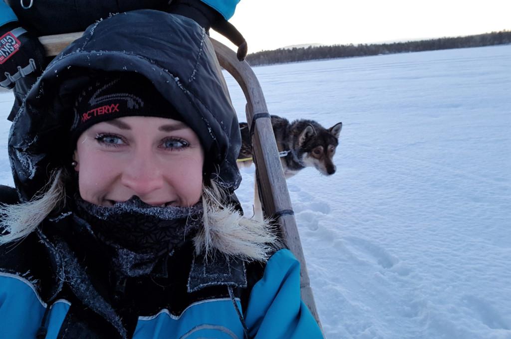 Husky Schlitten Lappland