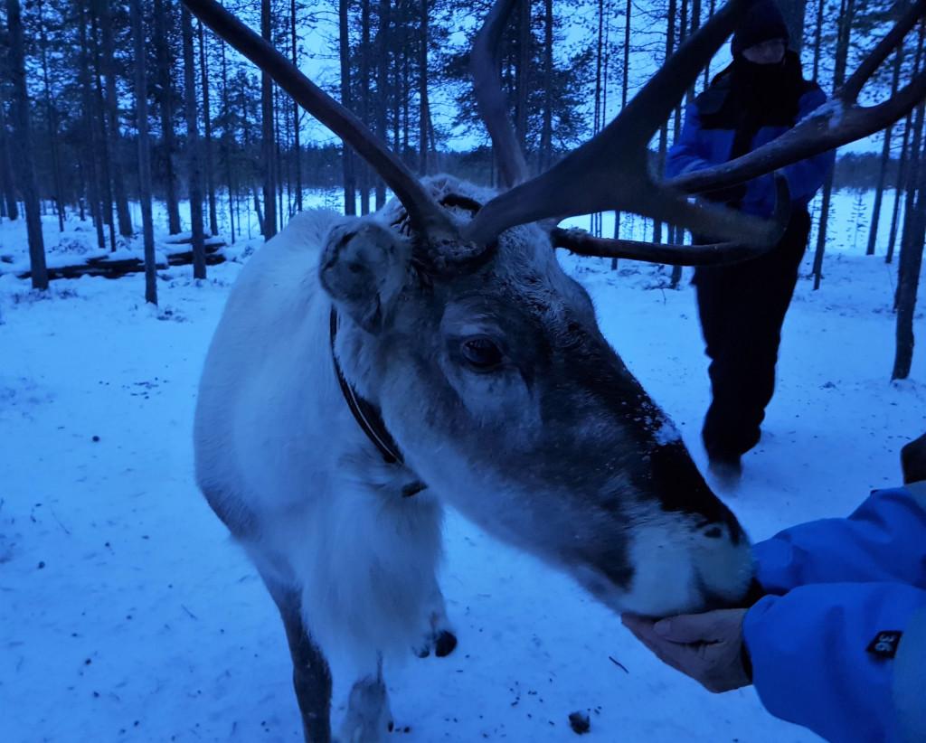 Rentier Finnland